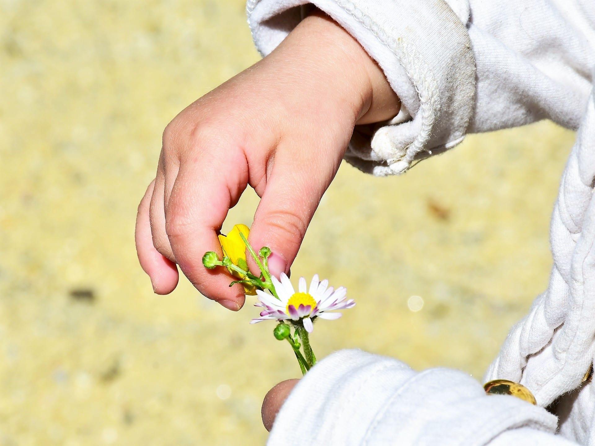 Gänseblümchen, Kind, Hand, Kinderhände, Großfamilie