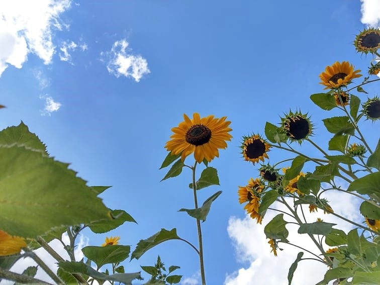 Puddingklecks Sonnenblume Mamablog Bucket List