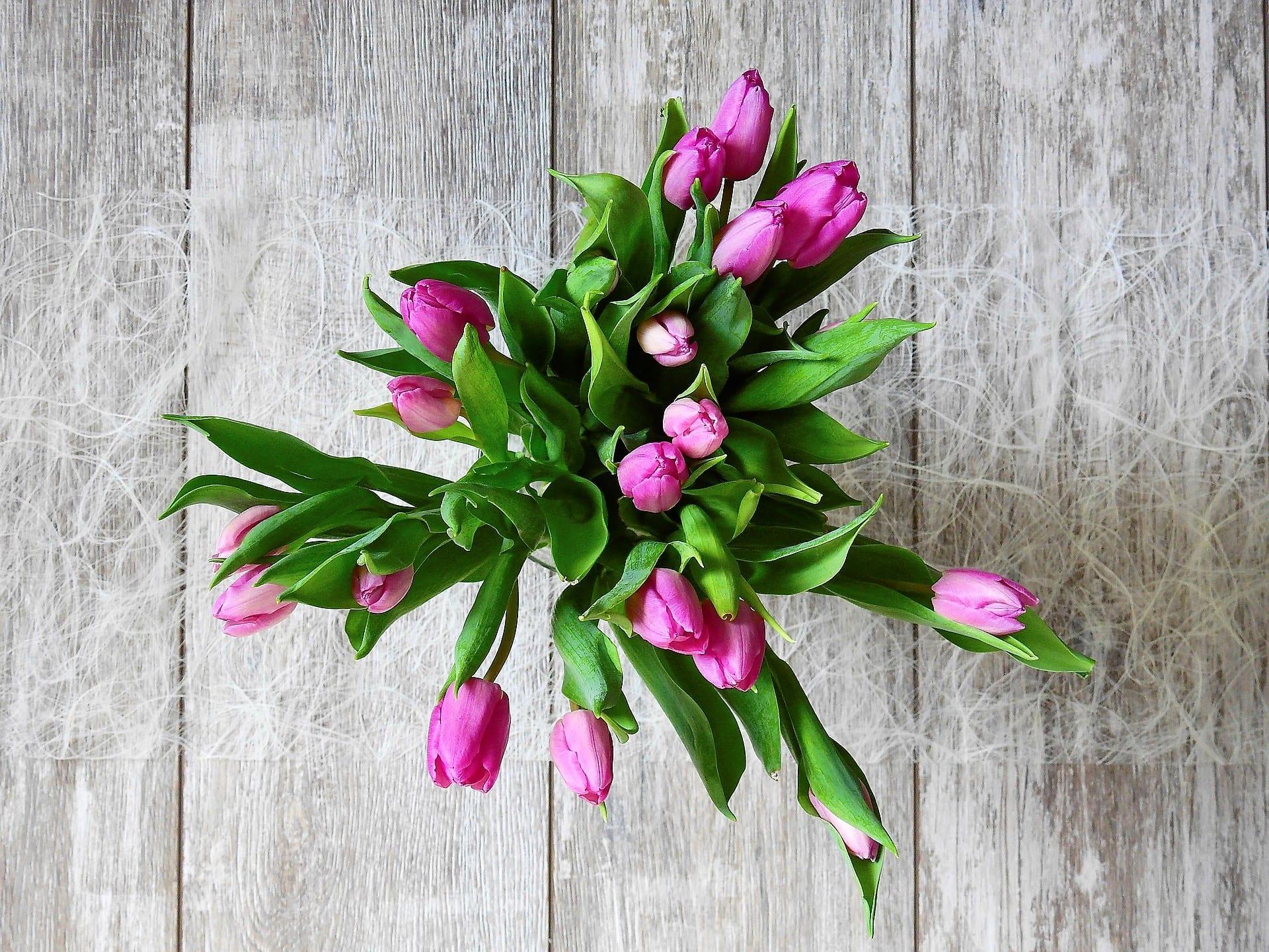 Tulpen, lila, Holz, Titel