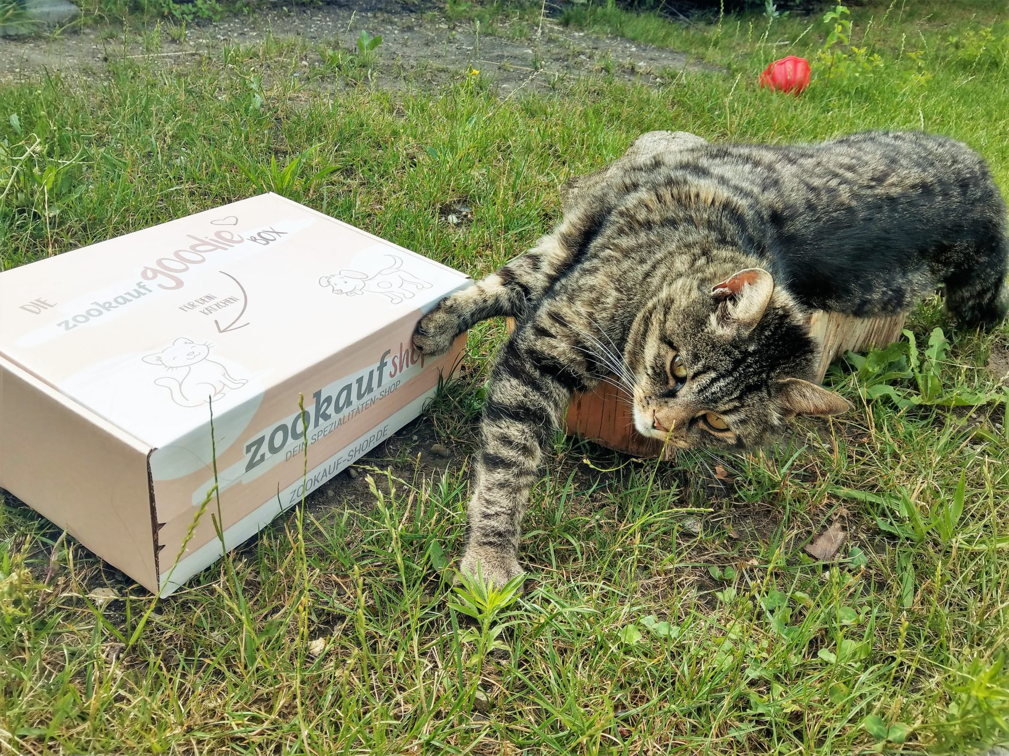 zookauf-shop, GoodieBox, Kooperation, Kater, Haustier