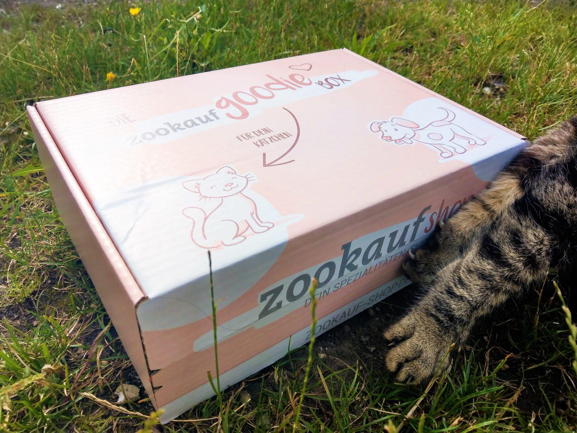 GoodieBox, Kater, Tiger, Wiese, zookauf-shop