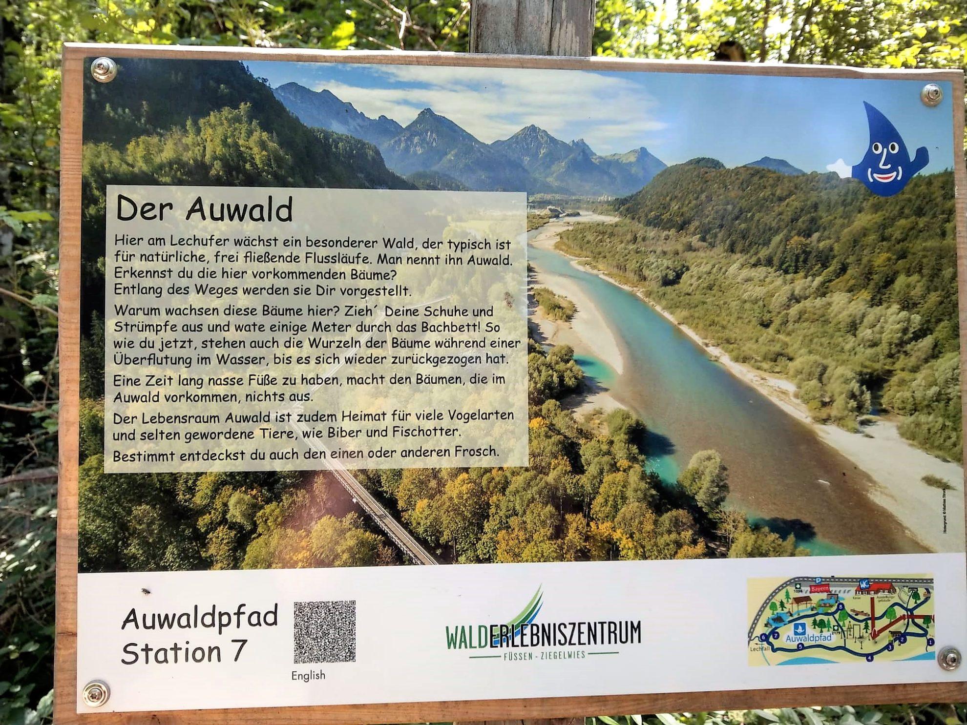 Auwaldpfad Station 7 Lech Wasser Erlebnispfad