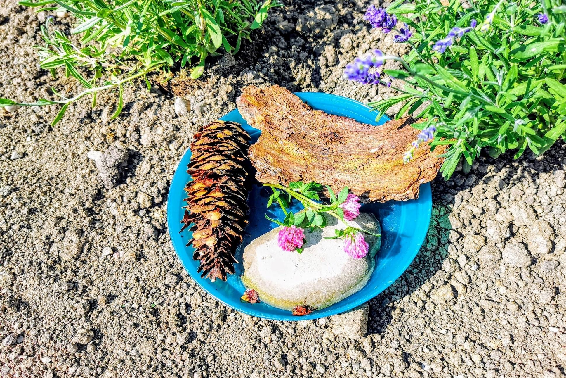Hier zeige ich dir, wie du ganz einfach aus Naturmaterialien, wie Steinen, Ästen und Rinde eine Insektentränke bauen kannst. Eine Wassertränke für Insekten, wenn der Sommer trocken ist.
