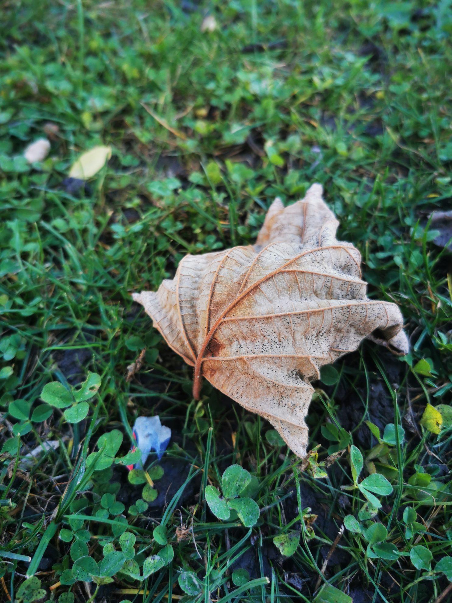 12 von 12 - Herbstlaub