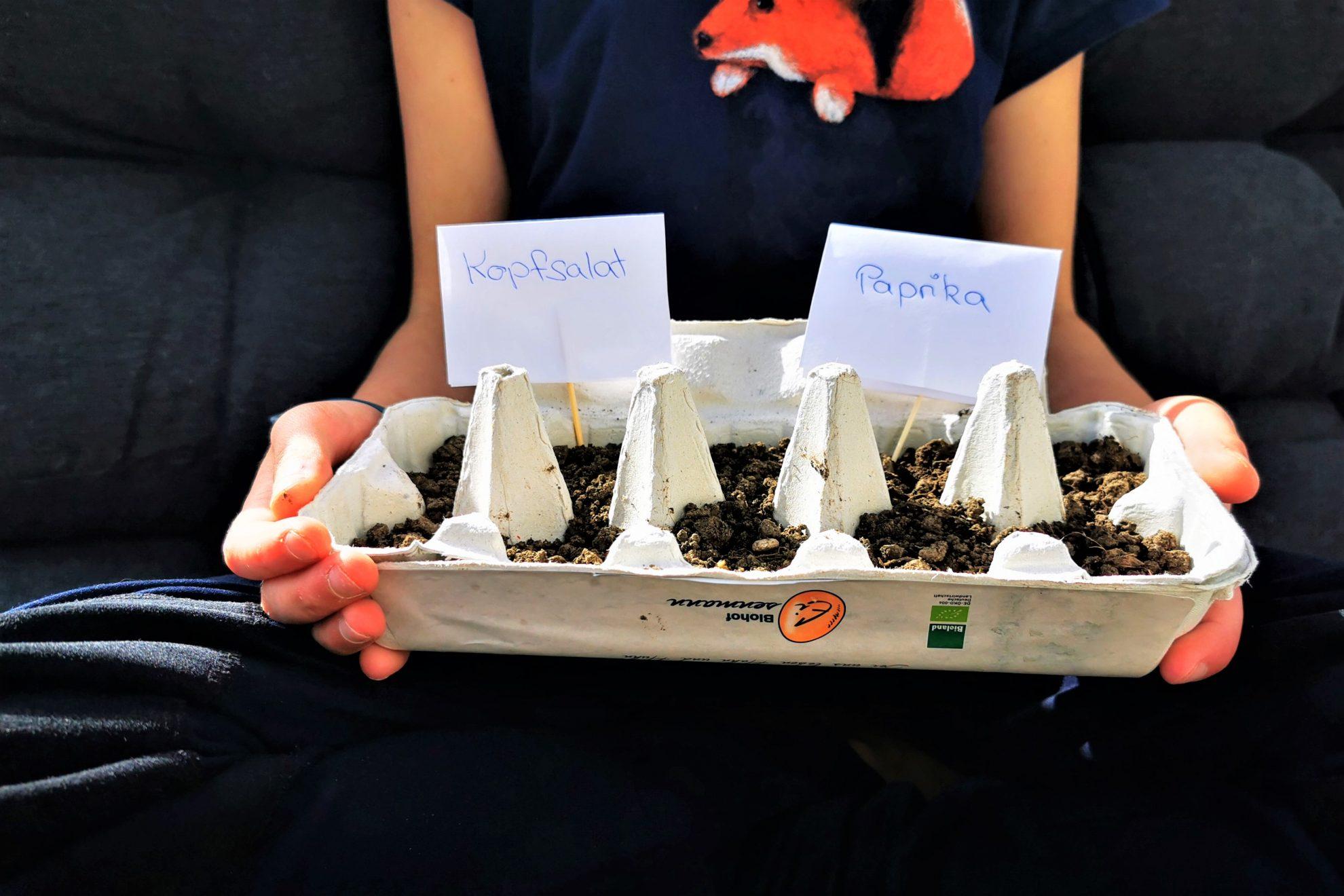 Pflanzen ziehen fürs Gemüsebeet - gar nicht so schwer. Ich zeige dir, wie du ganz einfach Gemüse im Eierkarton ziehen kannst. Nachhaltig gut!