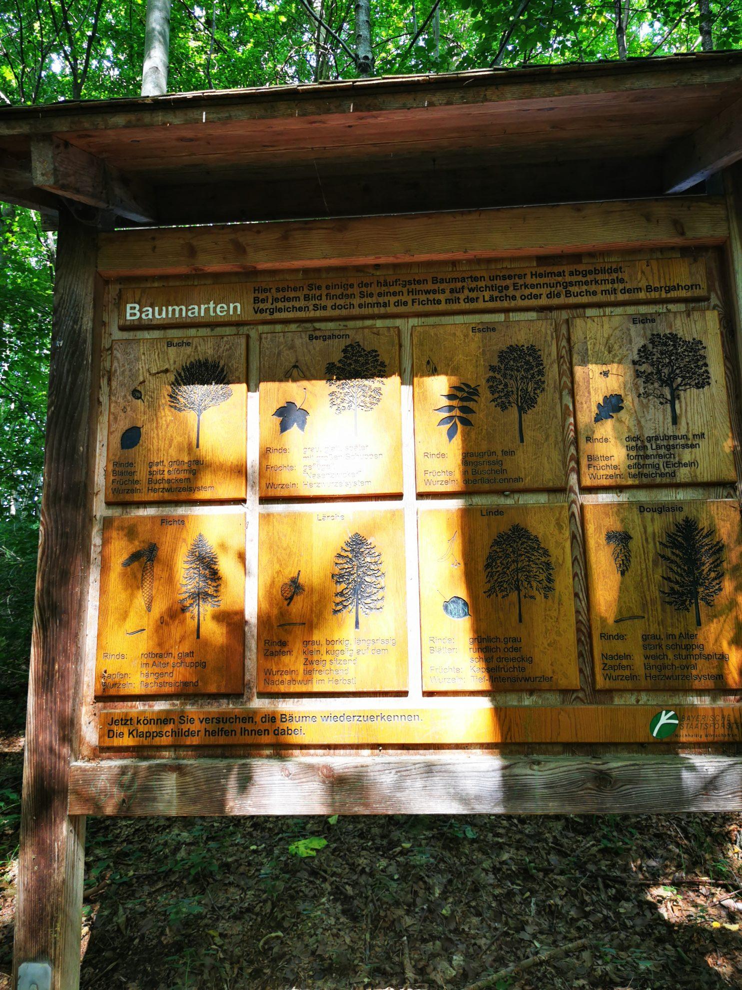 Beim Haldenburg-Wald-Weg in Schwabegg geht es auch um die verschiedenen Baumarten, die dort wachsen.