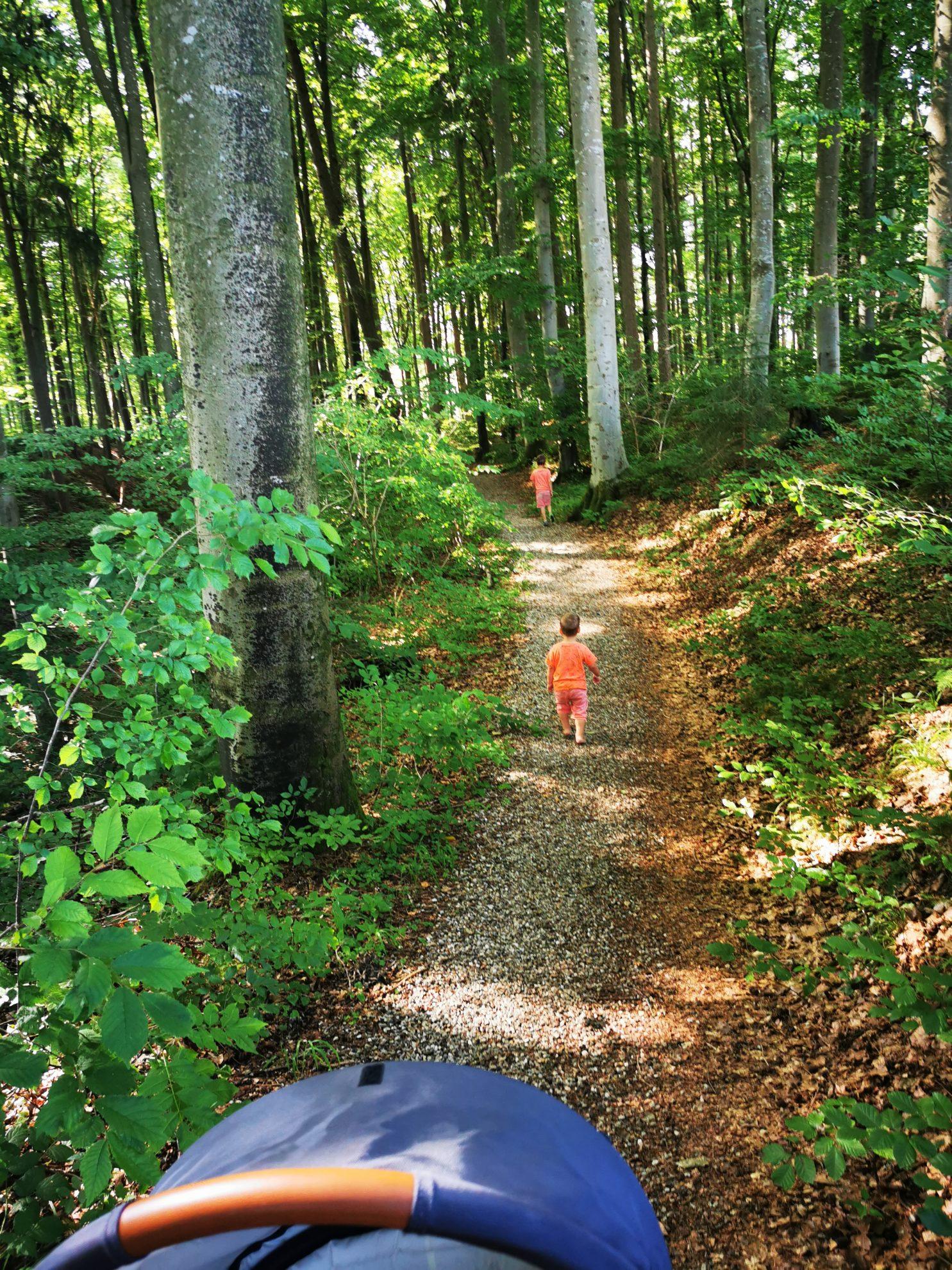 Ein gut befestigter Waldweg führt durch den Kulturlehrpfad Schwabegg