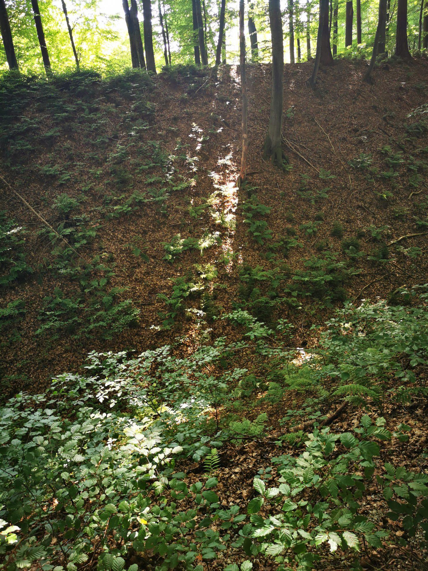 Das Lichtspiel im Wald durch die Bäume ist wunderschön und erdet. Grund genug, um ein wenig dort zu verweilen.