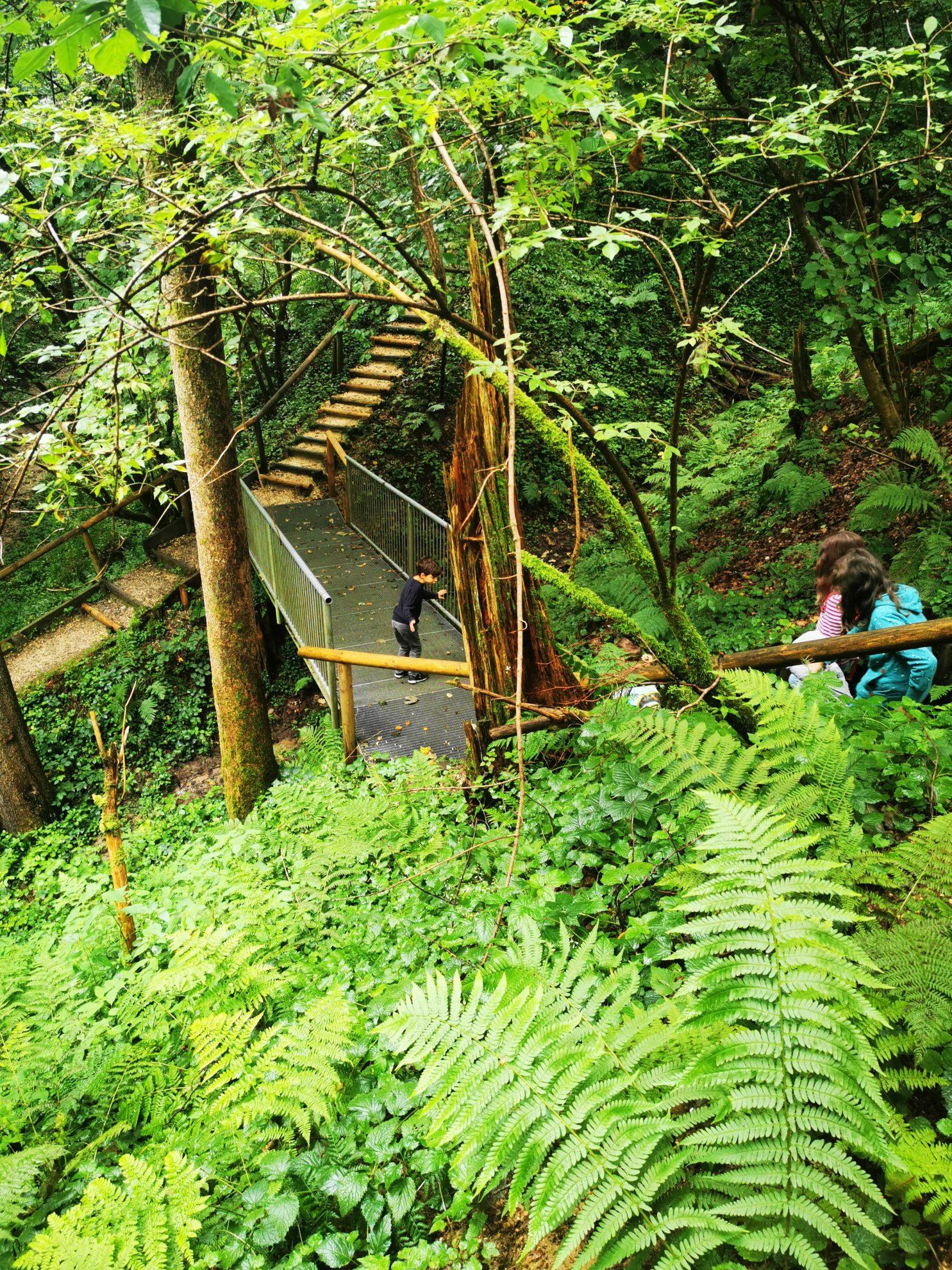 Spannende und verschlungene Wege führen durch den Wald.