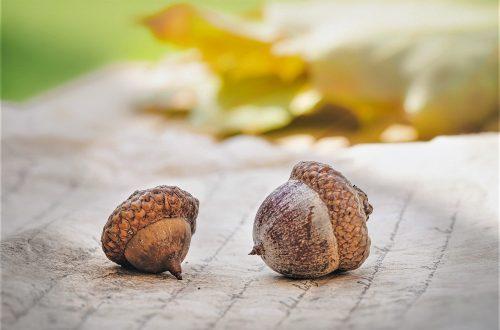 Mit dieser Herbst Bucketlist kannst du diese Jahreszeit bunt und liebevoll gestalten. Hier findest du tolle Ideen für die ganze Familie.