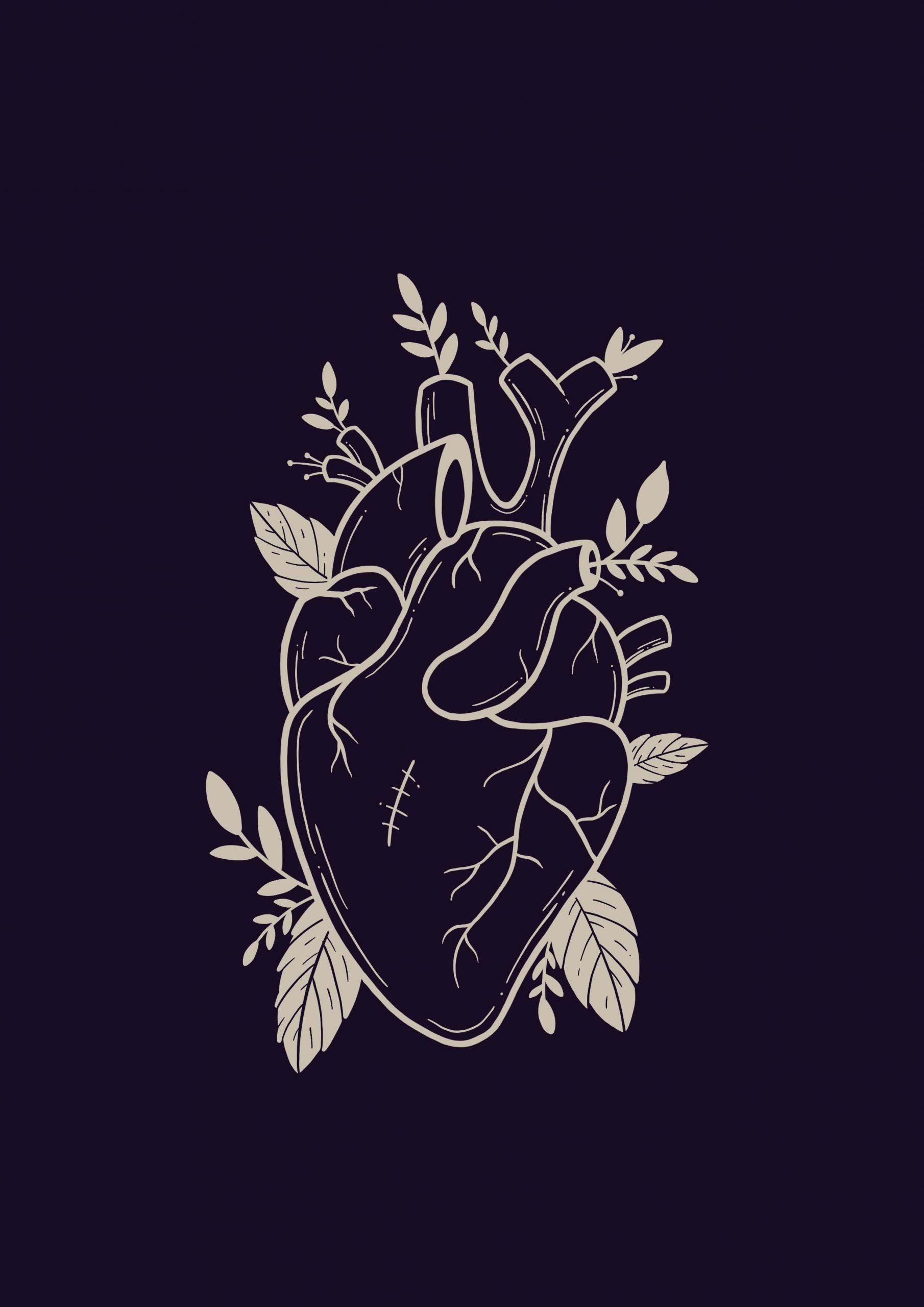 Illustratie anatomisch hart