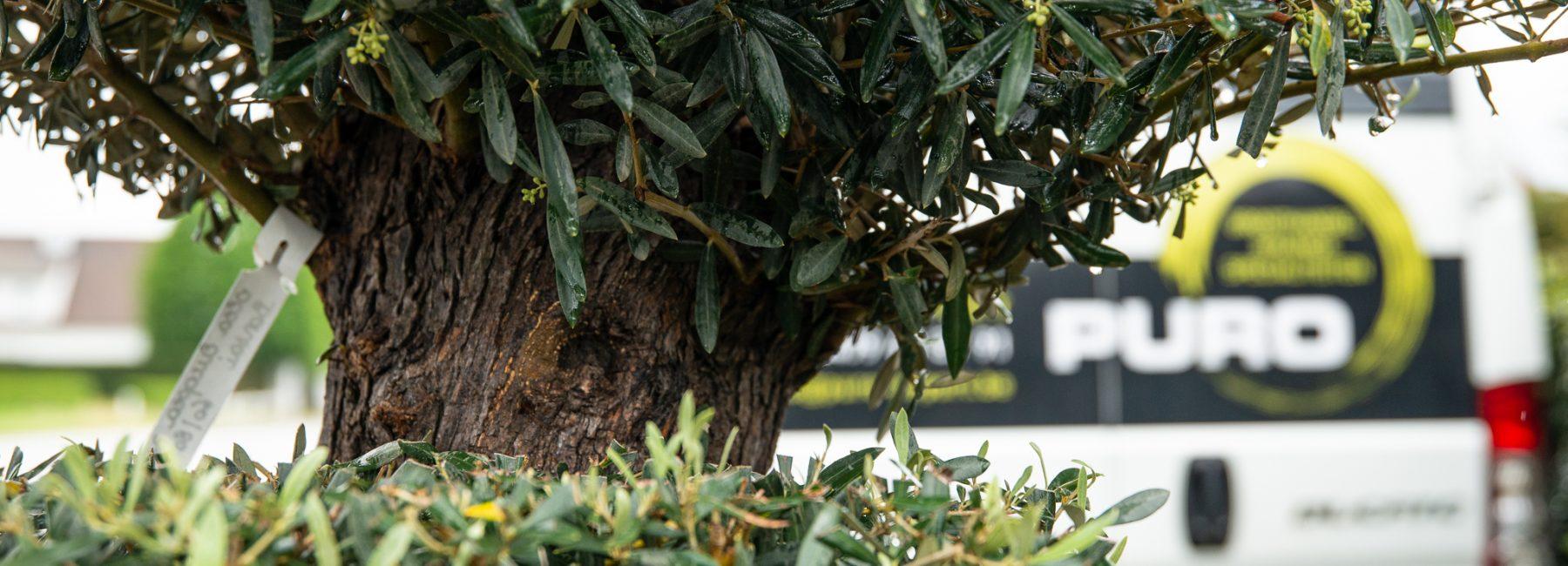 Puro Bomen