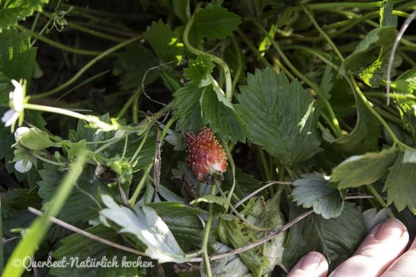 querbeetnatuerlichkochen.erdbeere