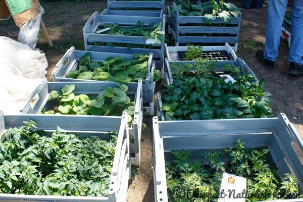 Querbeet-Natuerlichkochen.Pflanzenverkauf1