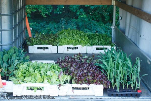 Querbeet-Natuerlichkochen.Pflanzenverkauf2