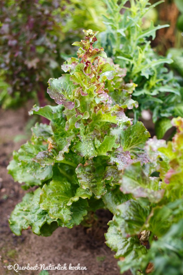 Salat.querbeetnatuerlichkochen