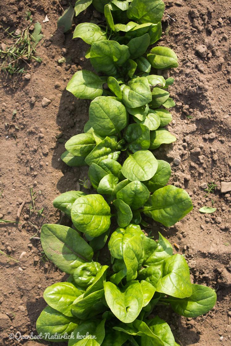 Gartenglueck2.1.Spinat.querbeetnatuerlichkochen