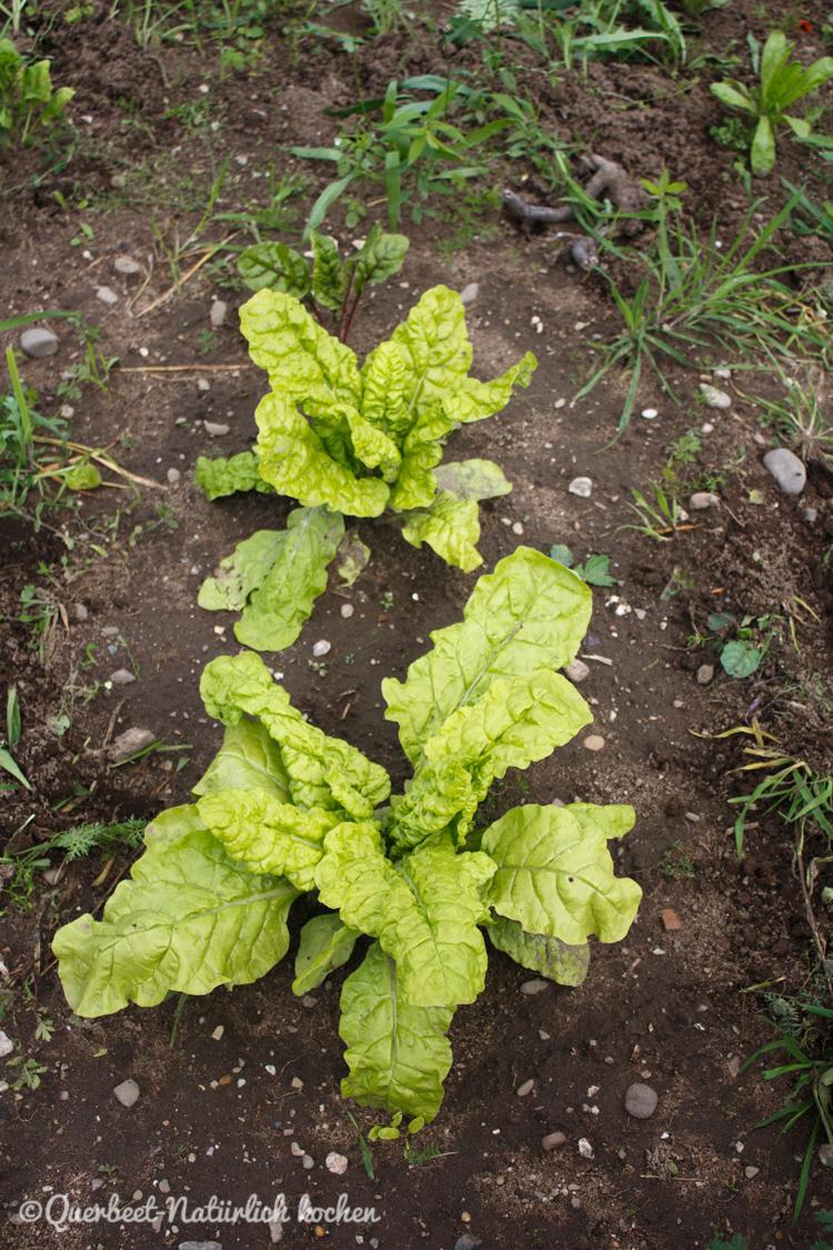 Gartenglueck2.42.Mangold.querbeetnatuerlichkochen