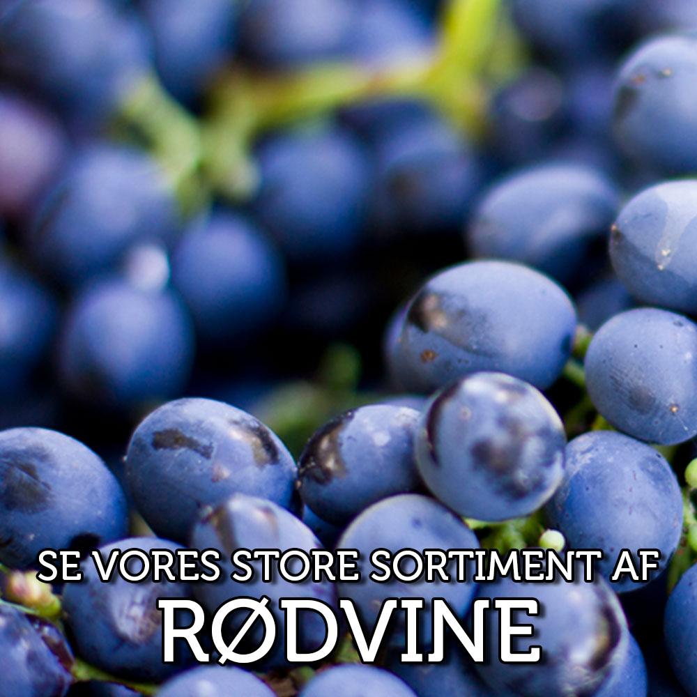 rodvin