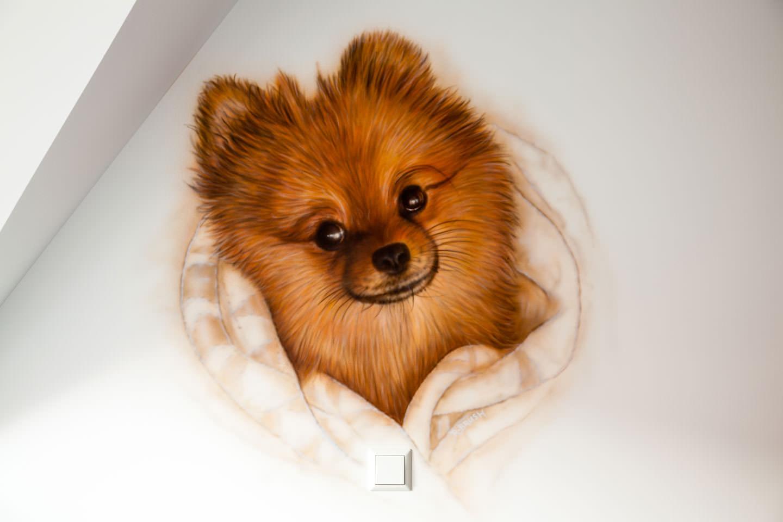 Hondje in slaapkamer boven bed