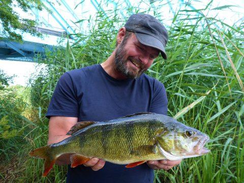 Aborrefiskeri i Randers Fjord og Gudenåen er sjovt og til for alle.