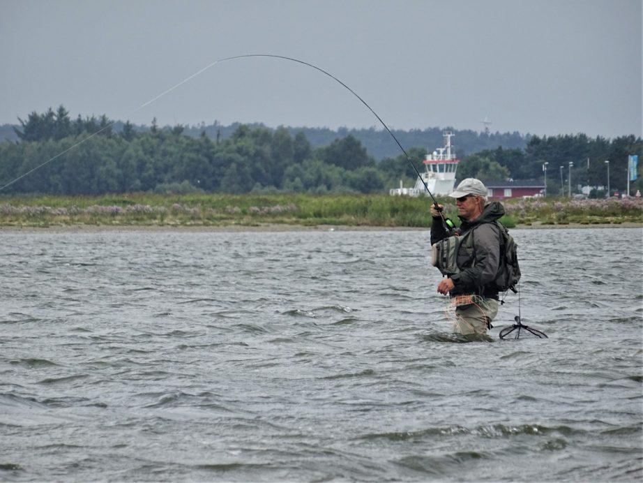 Fluefiskeri efter havørreder i Randers Fjord er sjovt. Her ses Jan med en havørred på krogen.