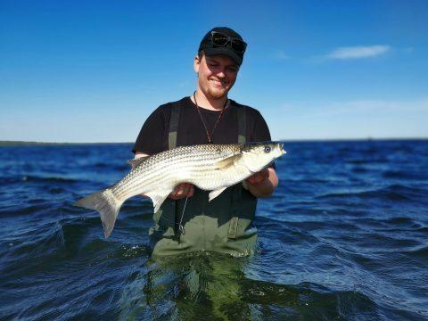 Multefiskeri i Randers Fjord er spændende og udfordrende.