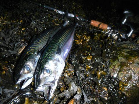 Makrelfiskeri i Randers Fjord er både sjovt og givende i sommerhalvåret.
