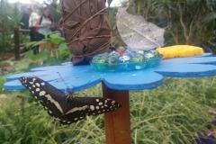 Schmetterlingsmuseum 024
