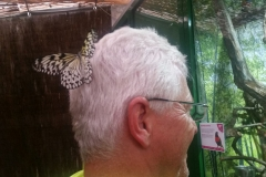 Schmetterlingsmuseum 026
