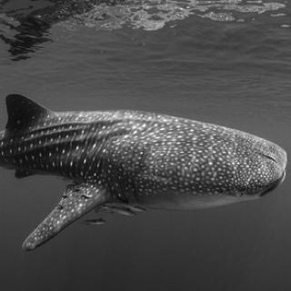 Julia Händel | Das Team der red sharks