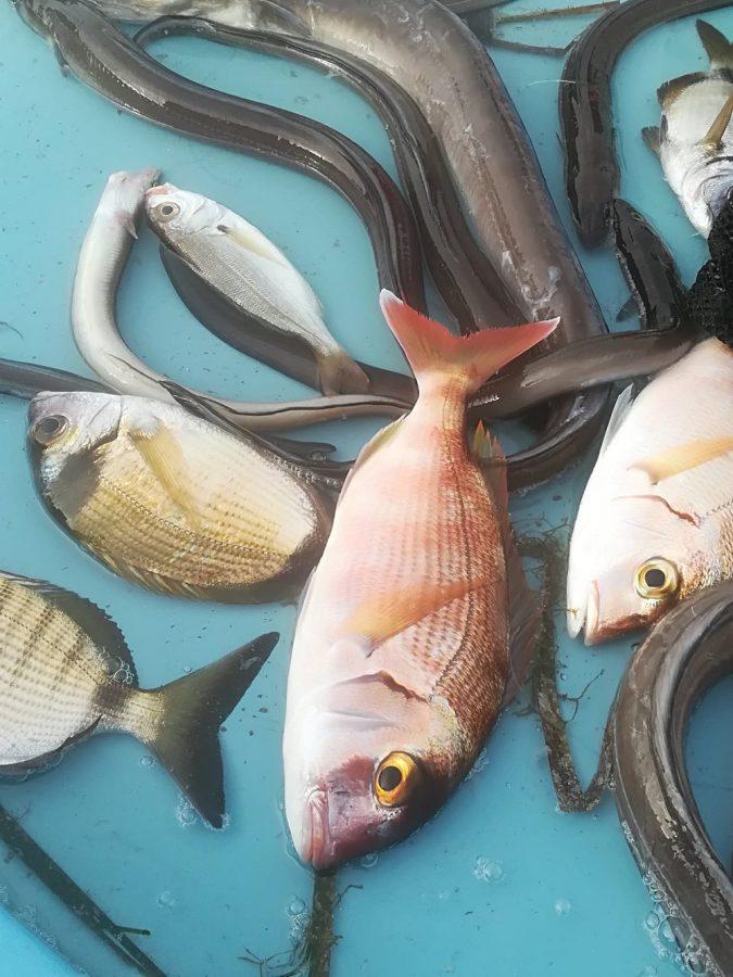Fisk i Marseilles