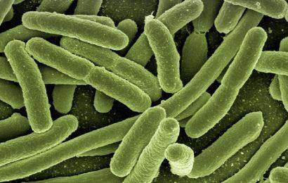 Bakterier overlever desinfektion