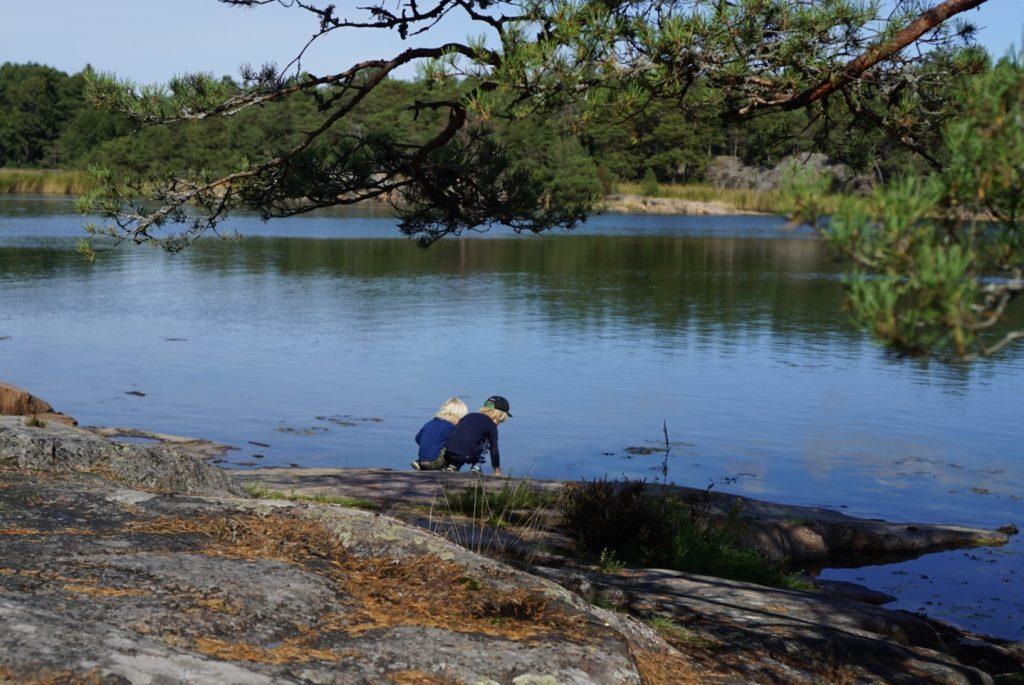 Love och Valter letar djur i vattnet.