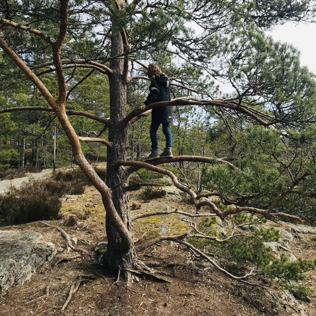 Love, 6 år, klättrar i träd på Lida Friluftsgård.