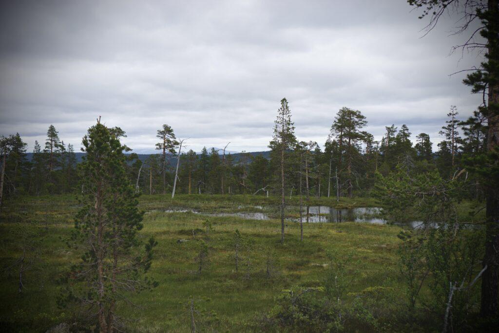 Myrmark i Fulufjällets nationalpark.