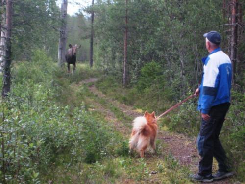 Solveig Gustafsson 16