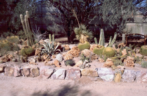 244 cactus nursery