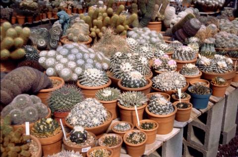 250 groep oude planten
