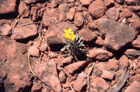 284 mini Wildflower