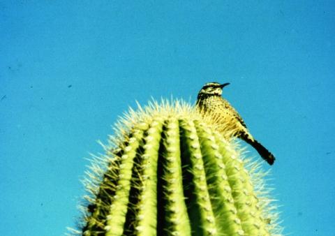 293 Cactus Wern  op de uitkijk