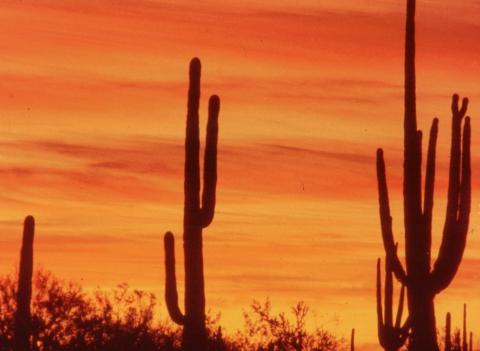 301 sunset met Saguaro
