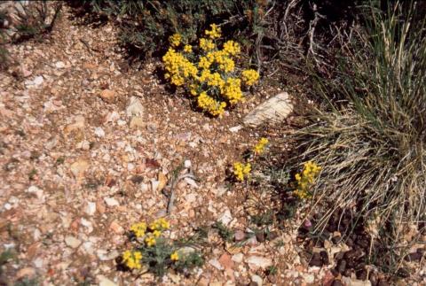 359 Wildflower