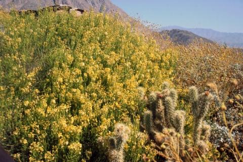 549 Wildflower