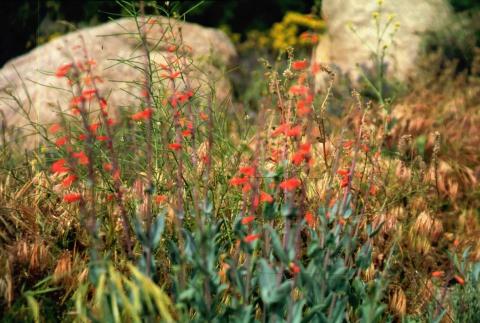 581 Wildflower
