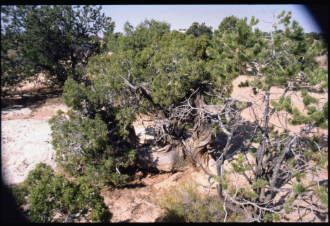 67 Canyonlands NP