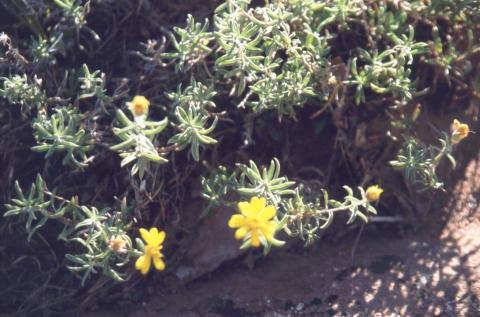 95 Canyon de Chelly NM