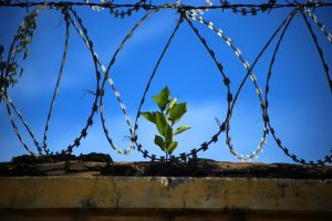 freedom - represented by a barbed wire fence and a plan in the background
