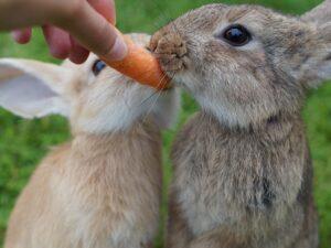 Foder til kanin, marsvin & hamster