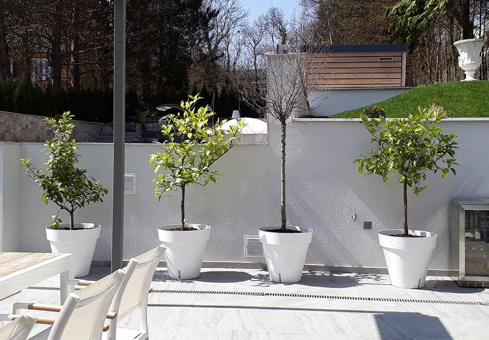 Rosenwalzer Terrassenbepflanzung